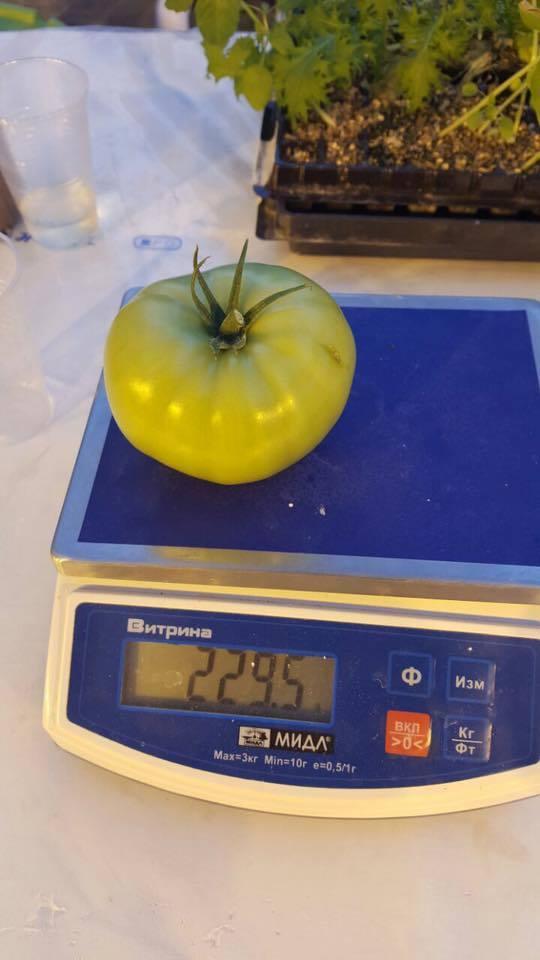 помидорки сырдах2