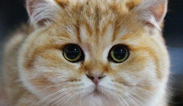 кошка2