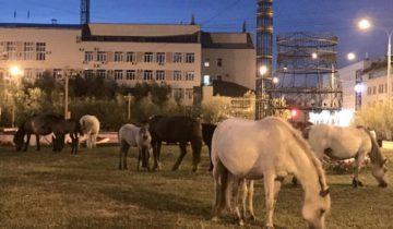 Лошадки в центре Якутска