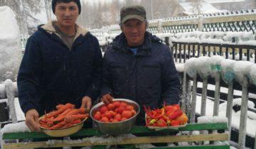Уборка урожая в Аргахтахе