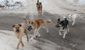 собаки якутск