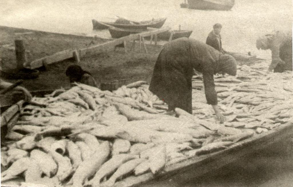 -Обработка рыбы Тит-Аринский рыбзавод