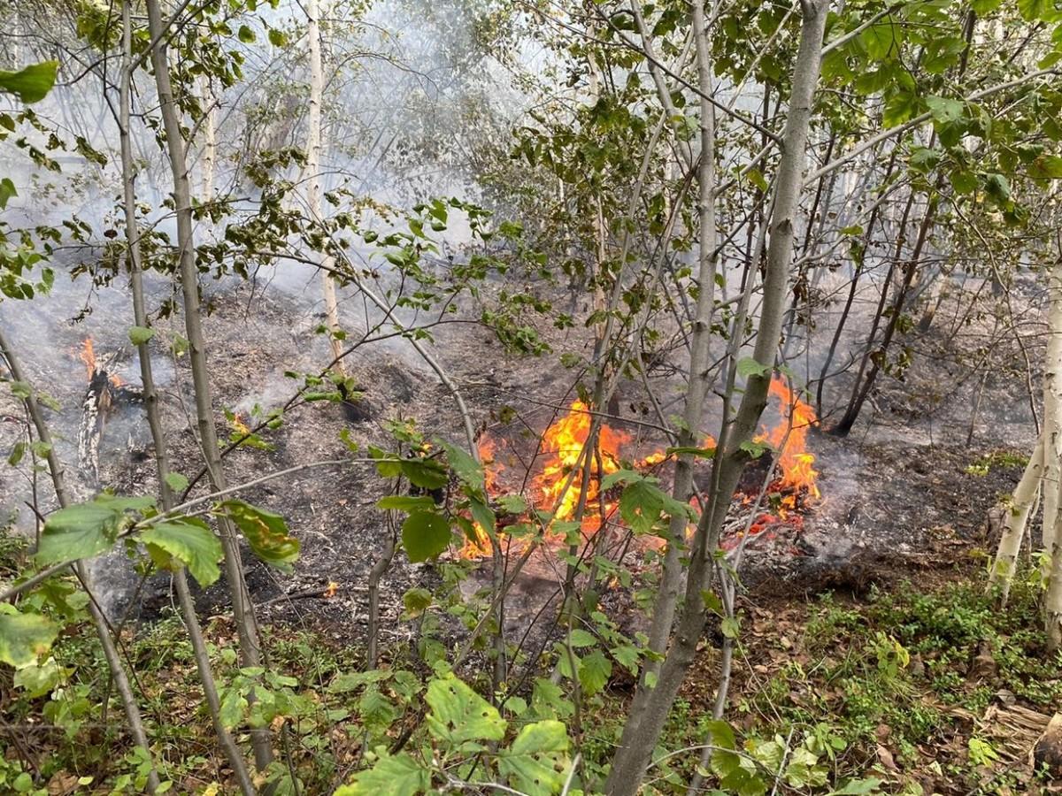 В Якутске локализован лесной пожар вблизи СОНТ «Сатал»