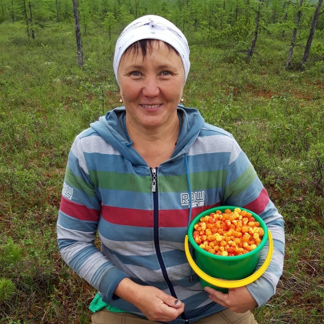 Дары якутского лета. Якутяне делятся в соцсетях фотографиями собранных ягод
