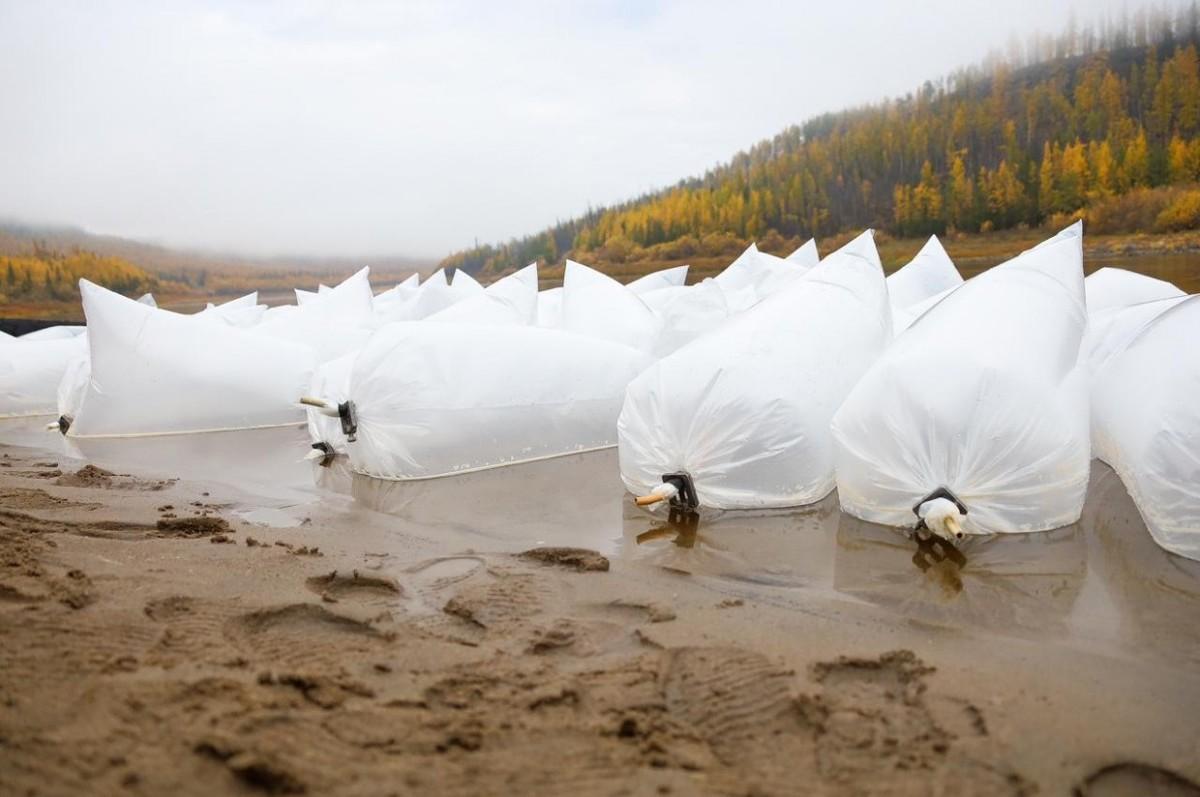 В реку Вилюй выпустили 65 тысяч мальков сибирского осетра