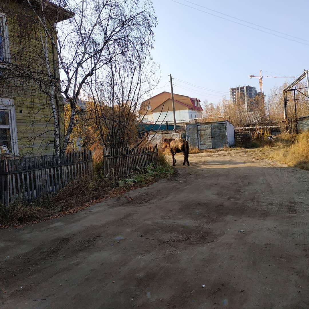 В Якутске спасатели вытащили из ямы застрявшую лошадь