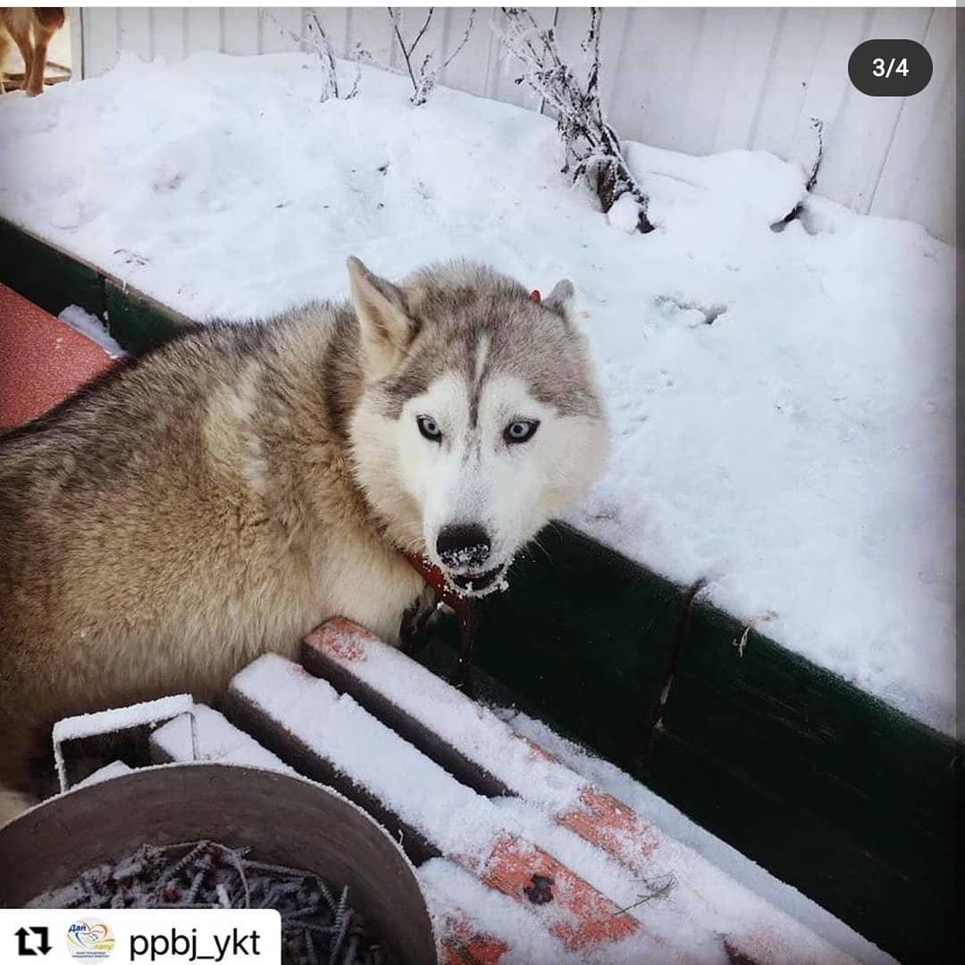 На зоозащитницу Злату Сычеву, спасшую хаски, написали заявление в полицию