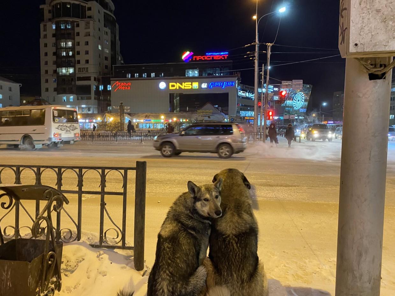 В Якутске сфотографировали влюбленную парочку собак