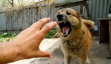 собаки нападение