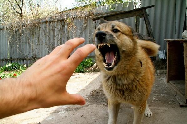 Более 160 человек ежедневно страдают от нападения собак, - депутат Бектурганов