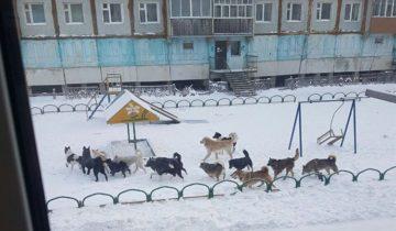 собачки в якутске