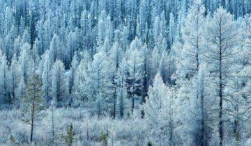 лес тайга