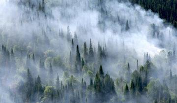 лесные пожары дым