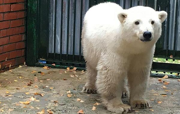 Картинки по запросу Медвежонку из Якутии выбрали имя