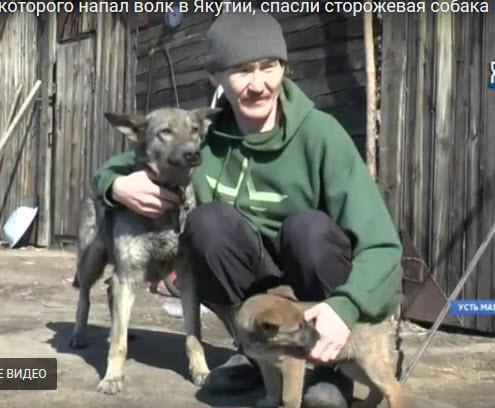 2018-04-16_22-13-09 Кочегара, на которого напал волк в Якутии, спасли сторожевая собака и ее щенок