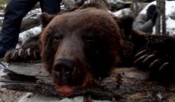 медведь, левченко, охота, иркутск