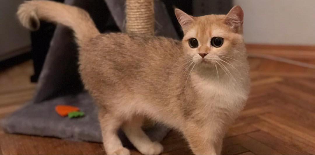 Картоха – любимая кошка героини интервью