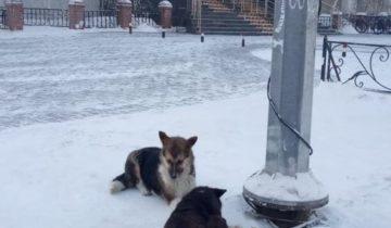 Мэрия и собаки2