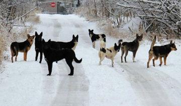 Собаки в Якутии