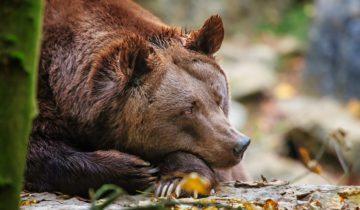 grustnyy-medved